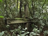 Cmentarz ewangelicko-augsburski w Anielinie