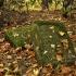Cmentarz ewangelicko-augsburski w Kobylach