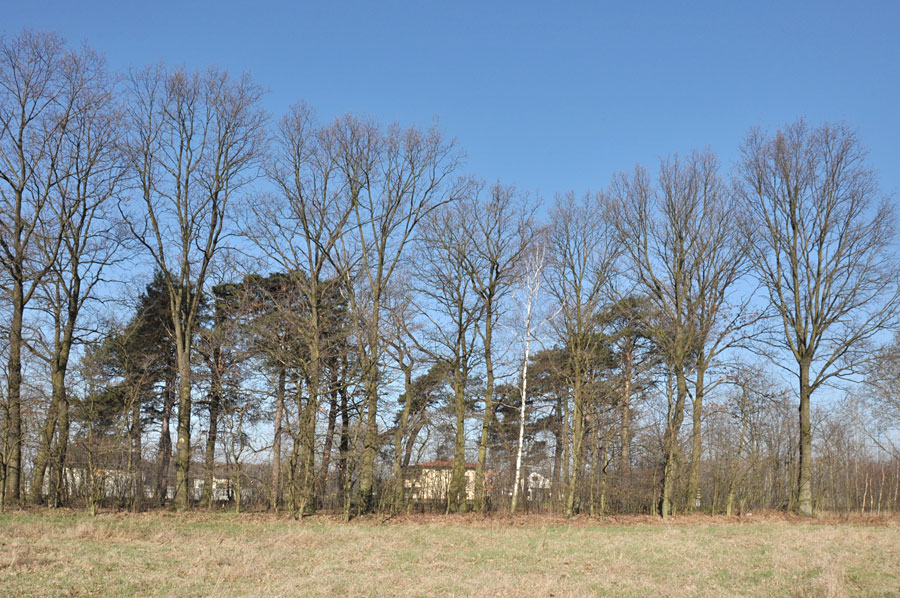 Cmentarz ewangelicko-augsburski w Kurówku