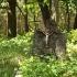 Cmentarz ewangelicko-augsburski w Ostrówku