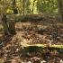 Cmentarz ewangelicko-augsburski w Piaskowej Górze
