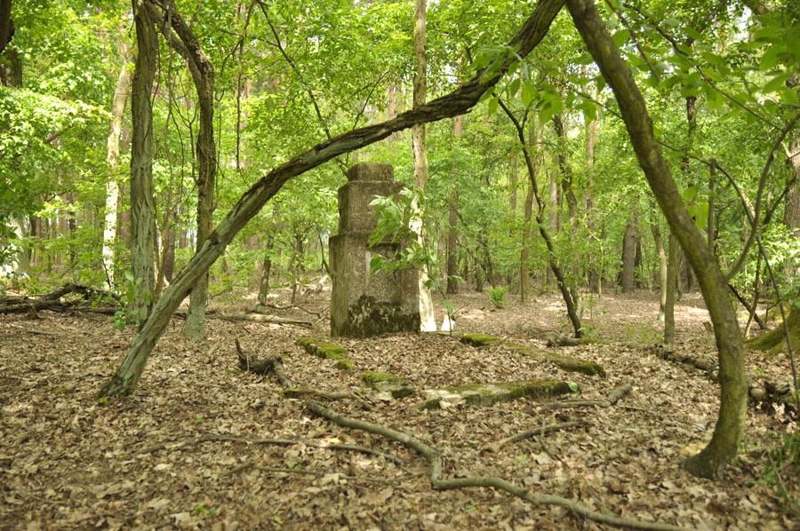 Cmentarz ewangelicko-augsburski w Woli Mikorskiej